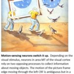 motion processing